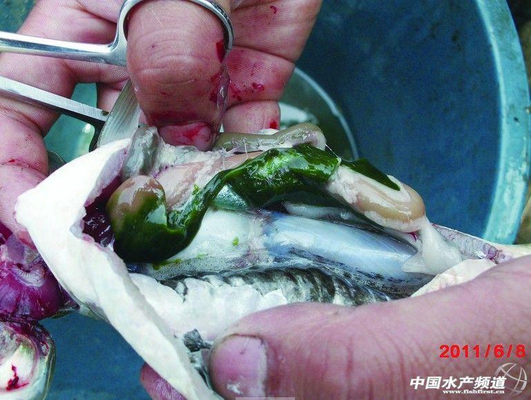 863鱼类学与动物生理生化